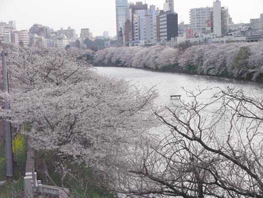 神田川.jpg